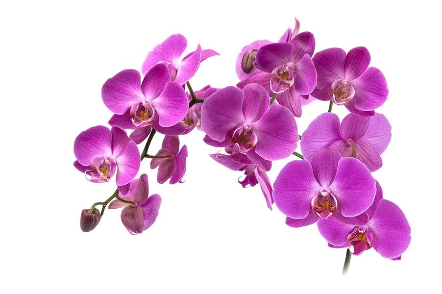 flowers 533