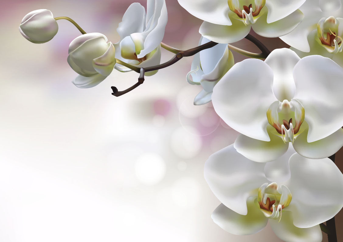 flowers 536