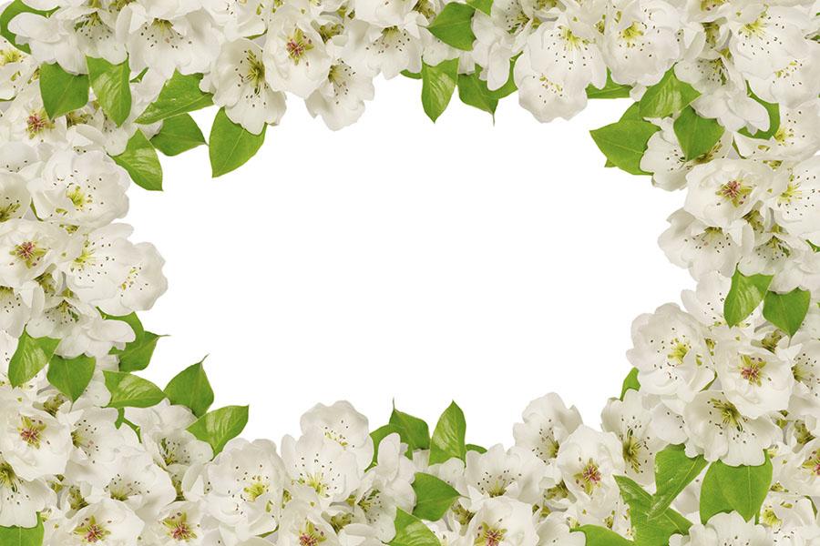 flowers 545
