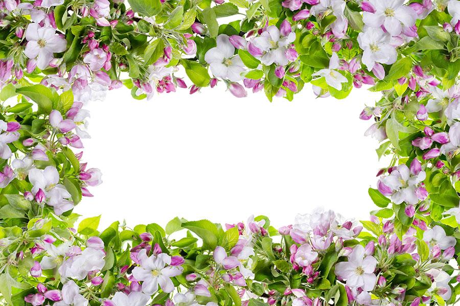 flowers 546