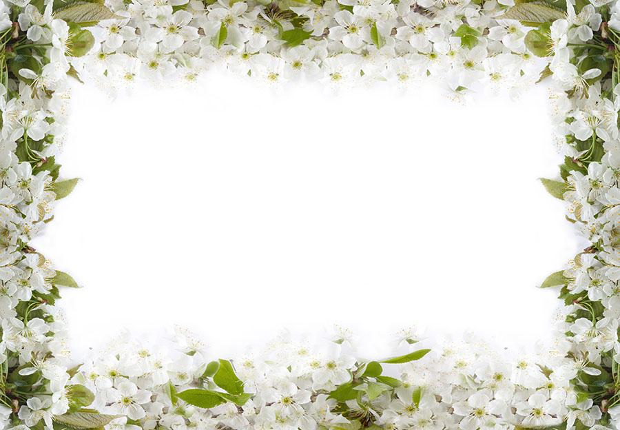 flowers 547