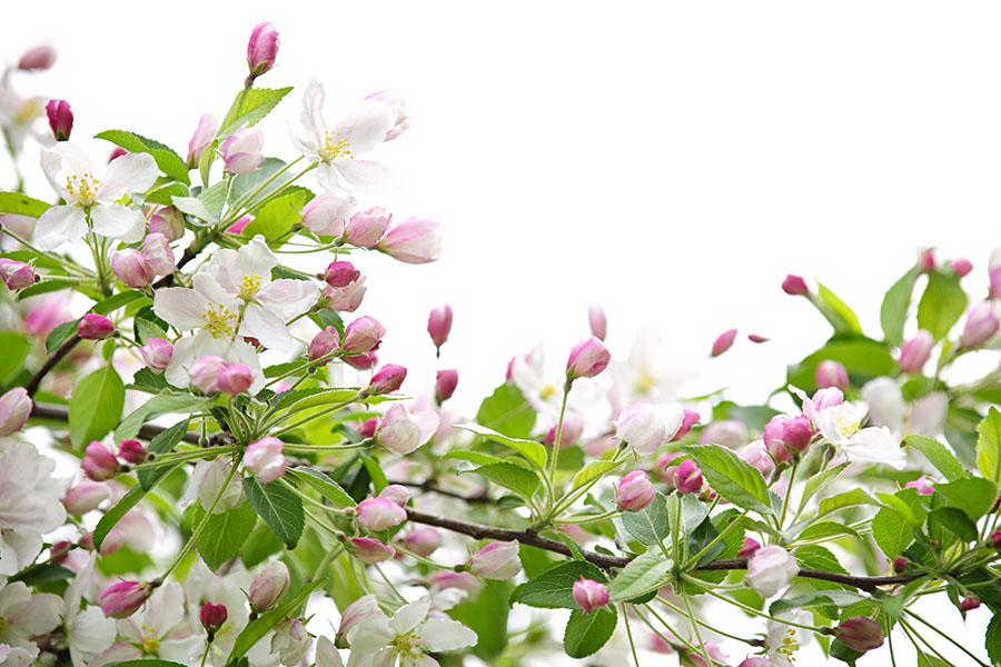 flowers 549
