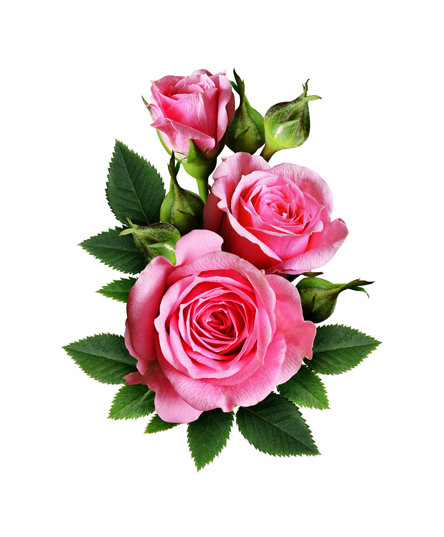 flowers 554