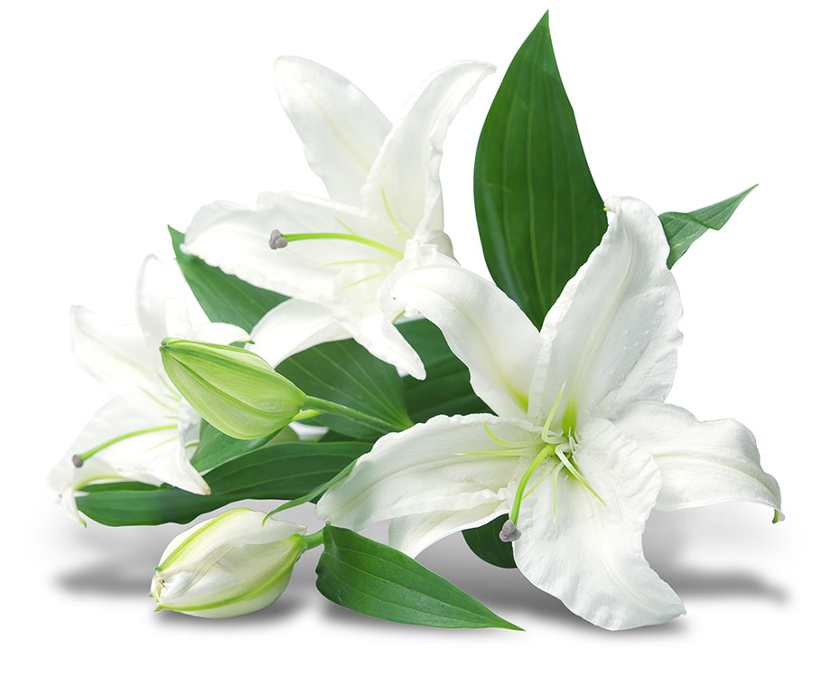 flowers 558