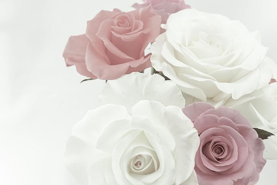 flowers 561