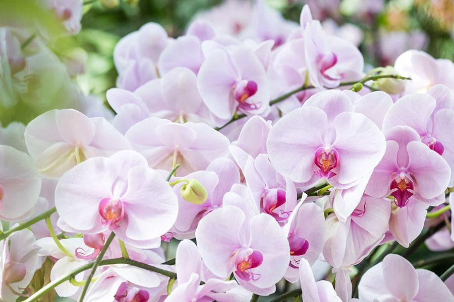 flowers 564