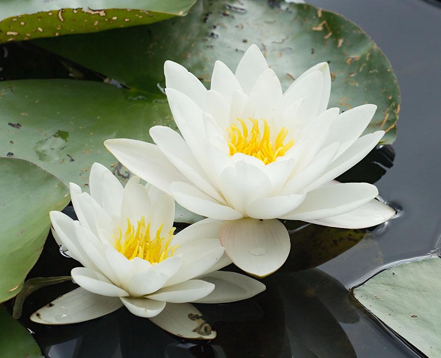 flowers 565