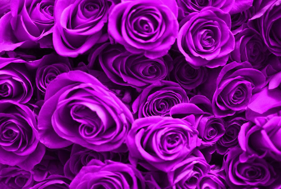 flowers 567