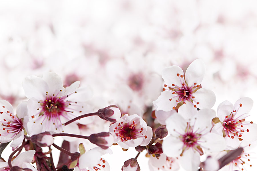 flowers 570