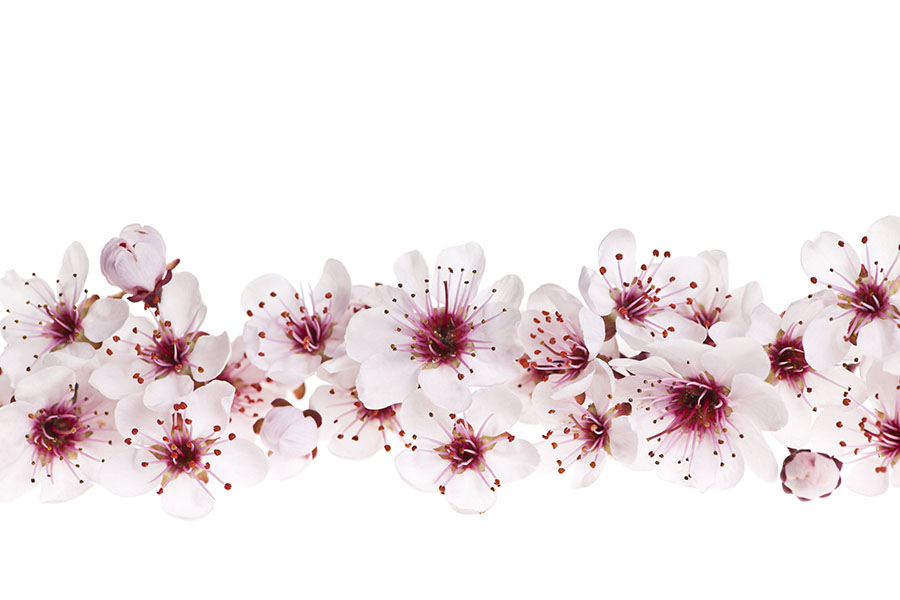 flowers 571