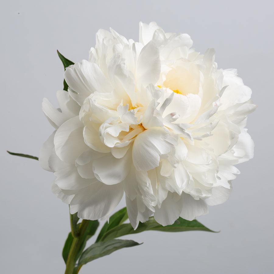 flowers 579
