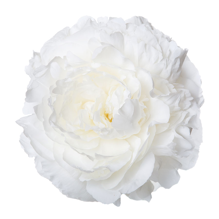 flowers 582