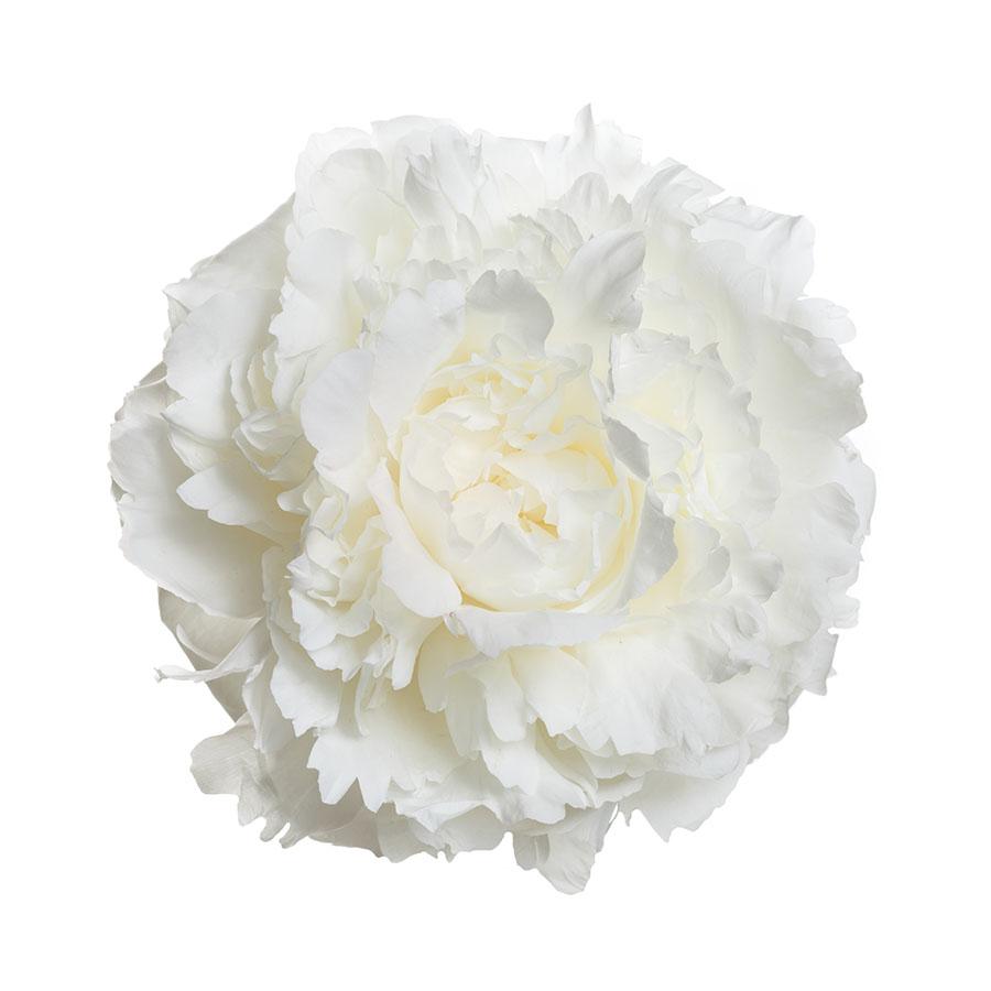 flowers 583