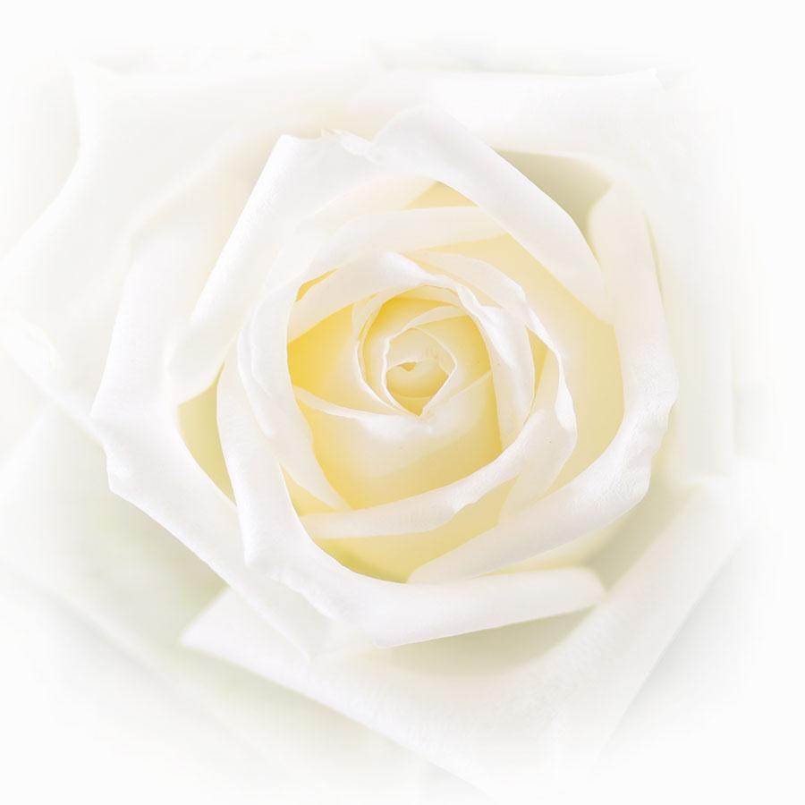 flowers 584