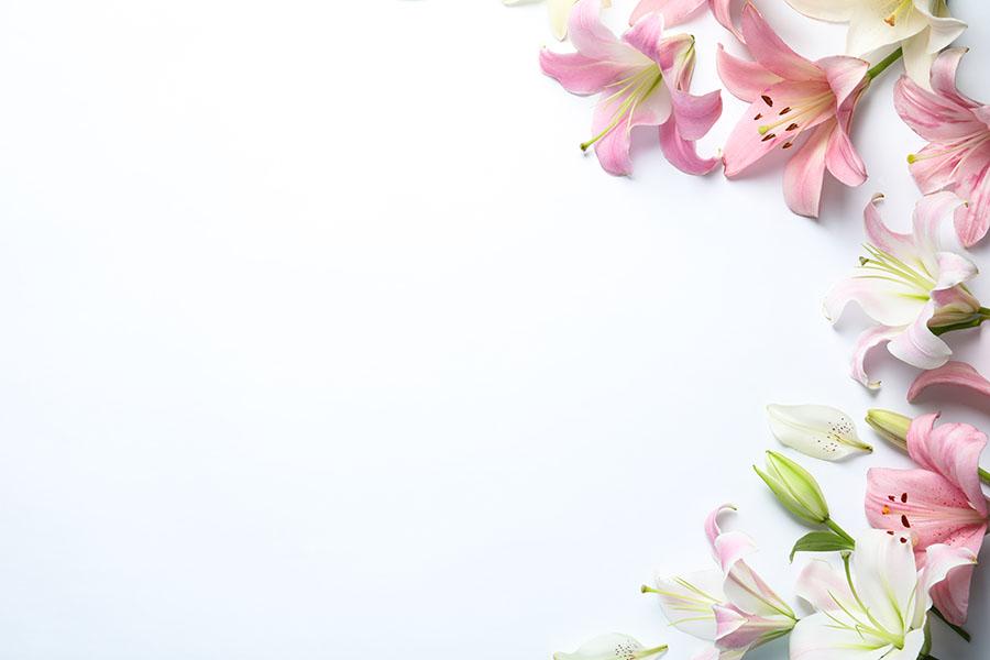 flowers 587