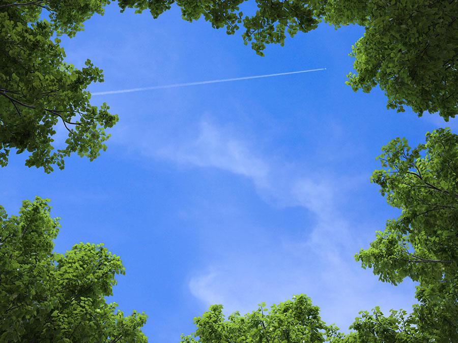 sky 342