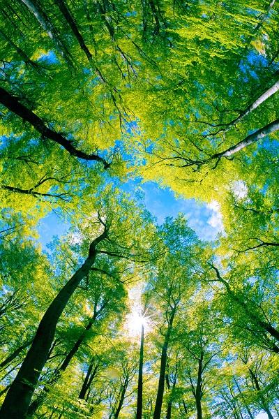 nature 012