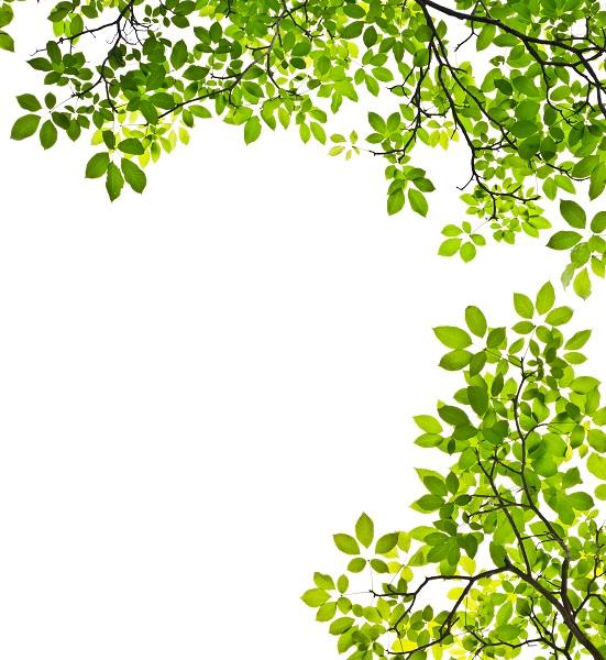 nature 032