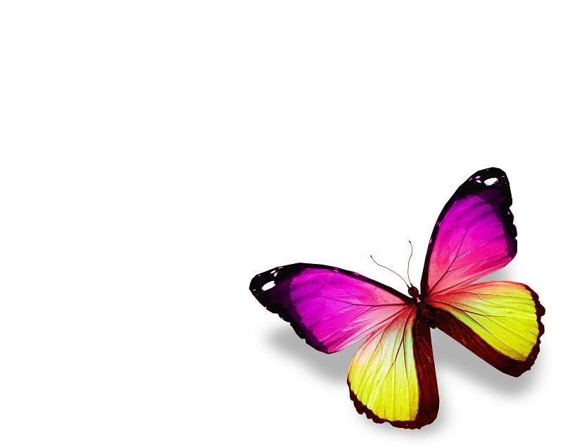 butterfly 010