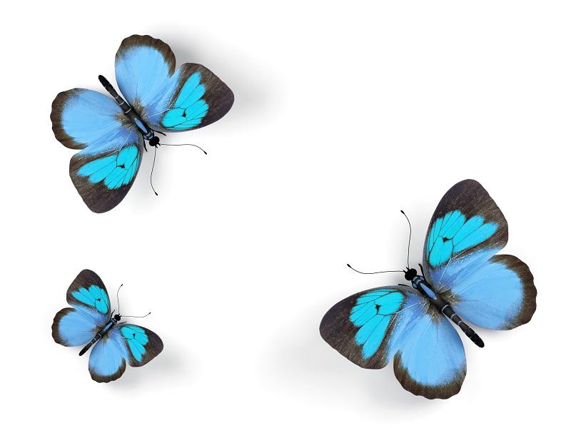 butterfly 013