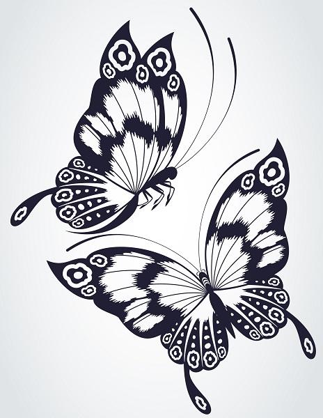 butterfly 019