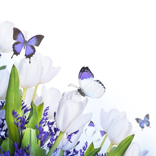 butterfly 028