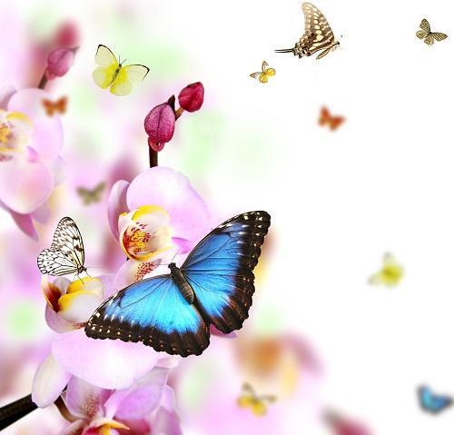 butterfly 024