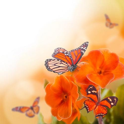butterfly 026