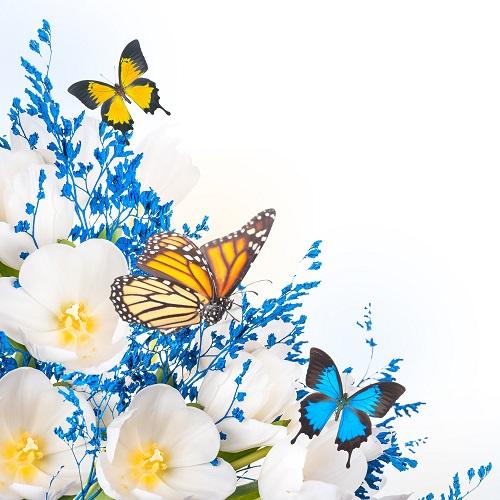 butterfly 027