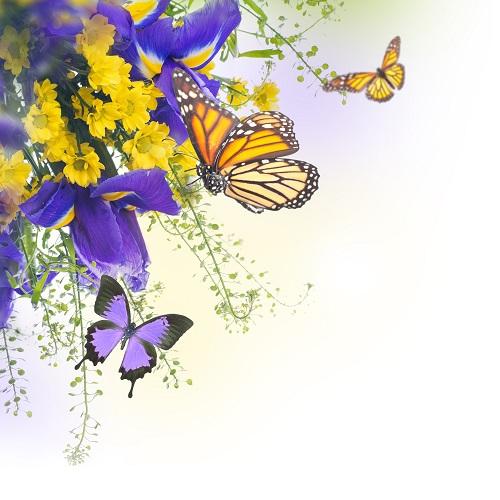 butterfly 030