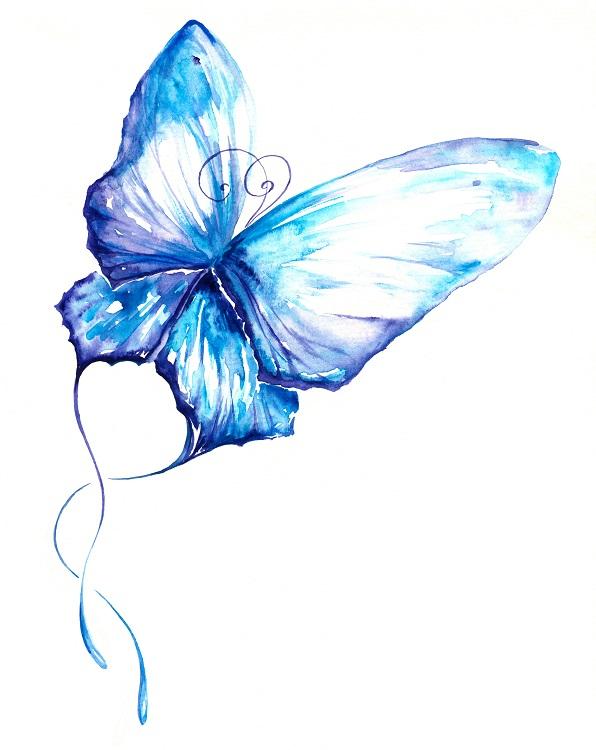 butterfly 041