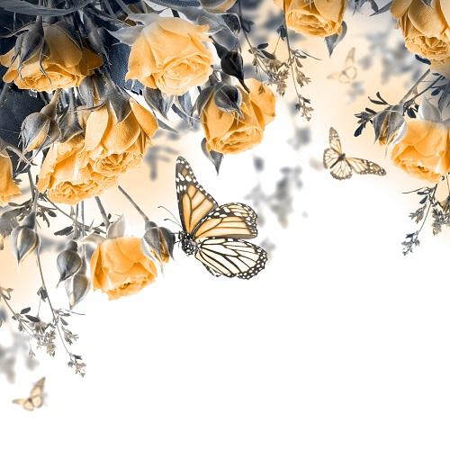 butterfly 032
