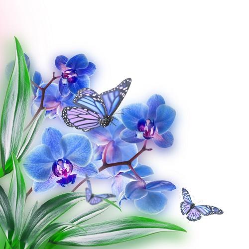 butterfly 033