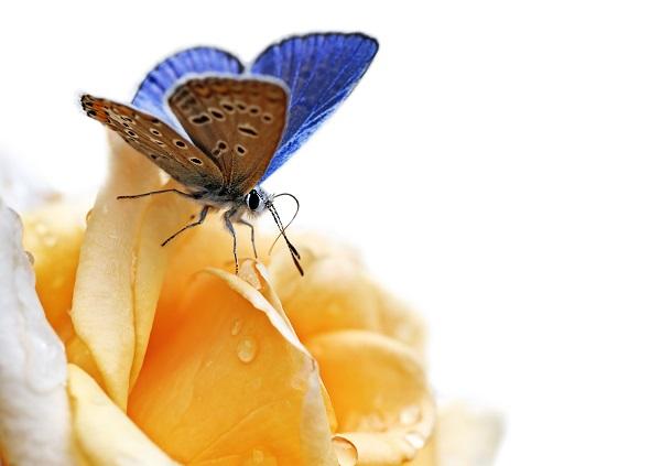 butterfly 036