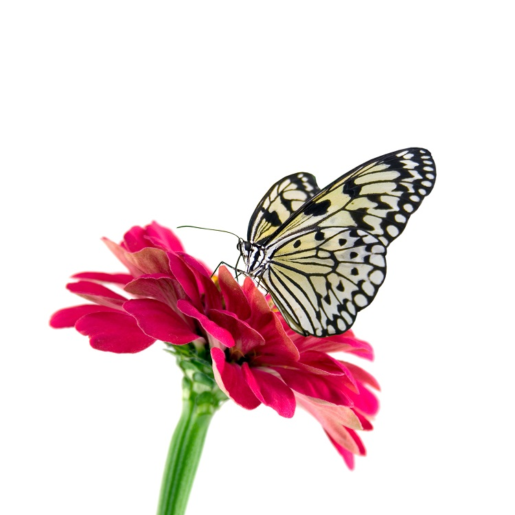 butterfly 039