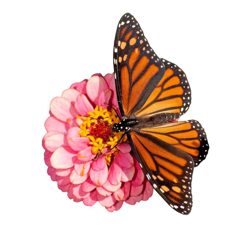 butterfly 045