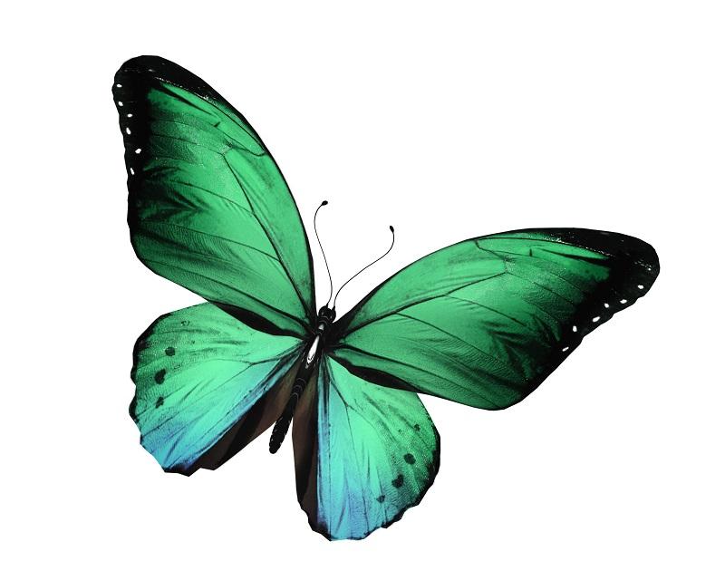 butterfly 047