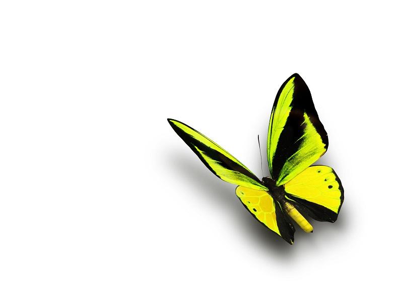 butterfly 050