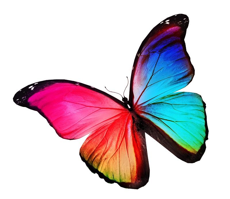 butterfly 051