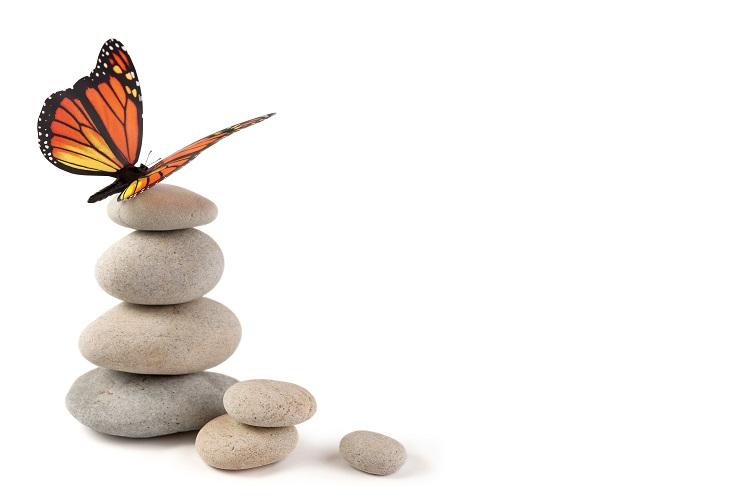 butterfly 053