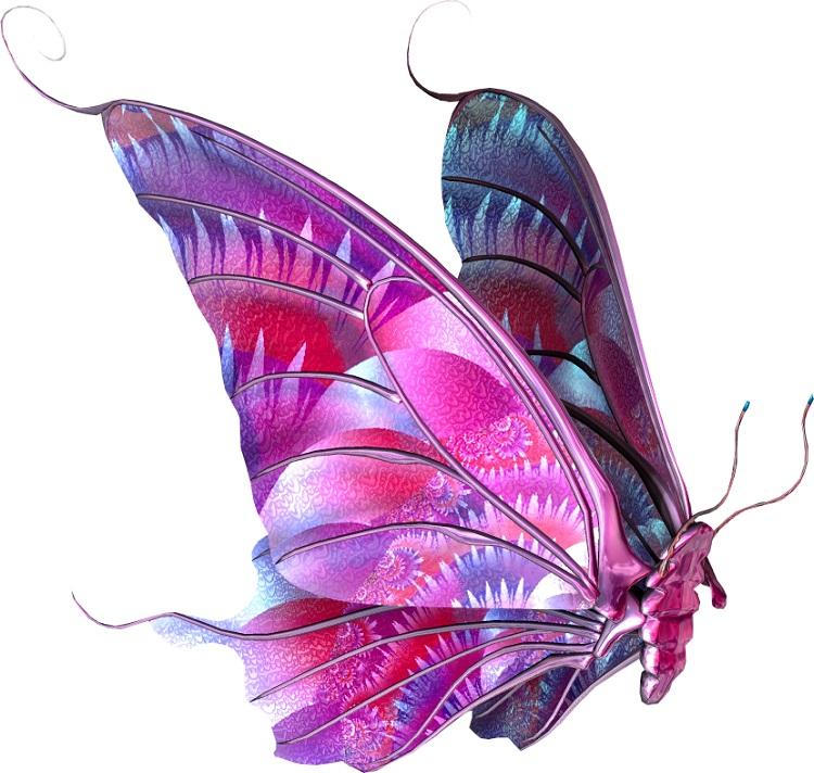 butterfly 054