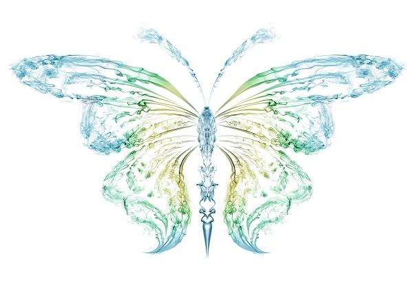 butterfly 055