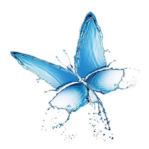 butterfly 056