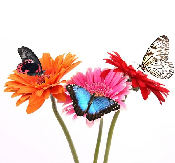 butterfly 069