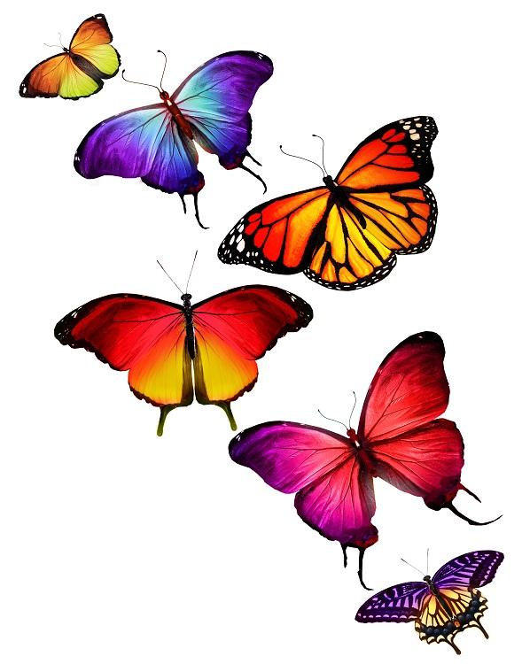 butterfly 073