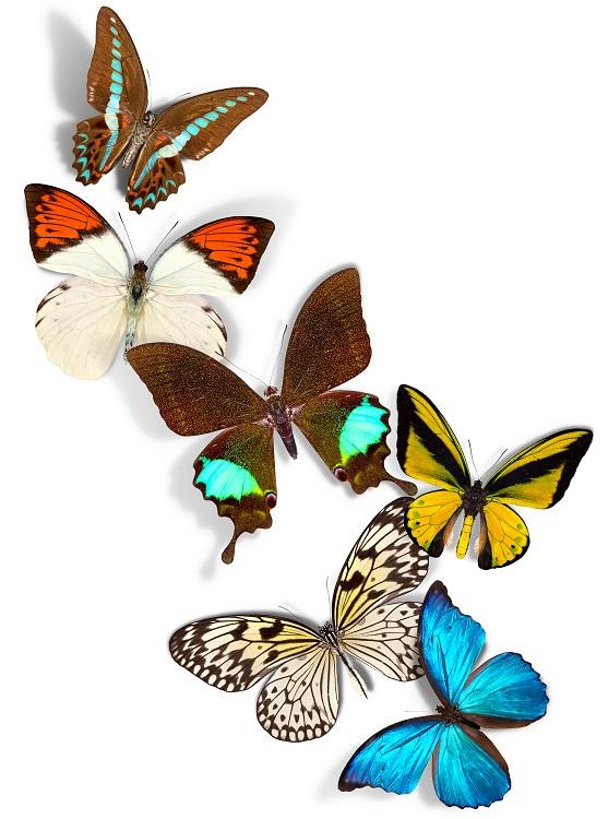 butterfly 074