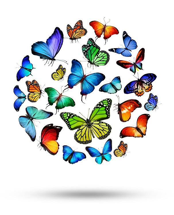 butterfly 075