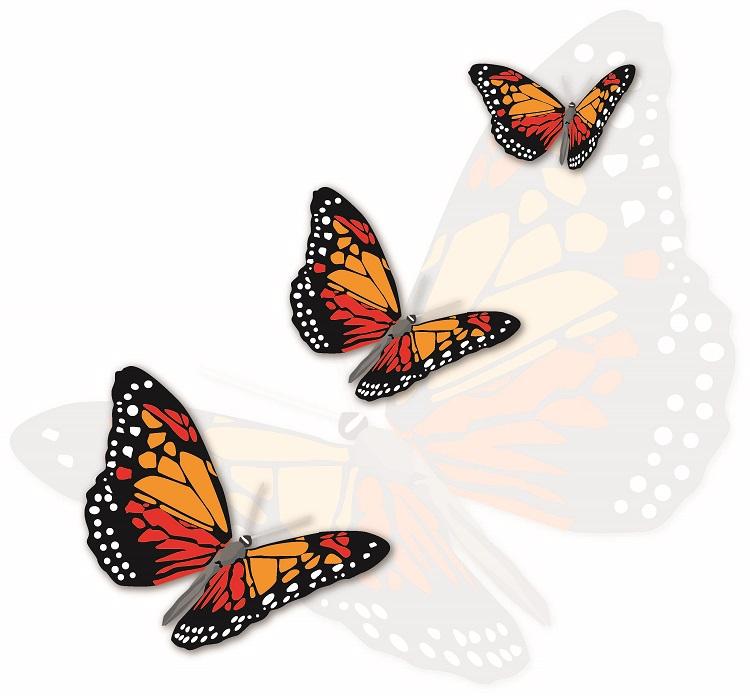 butterfly 077