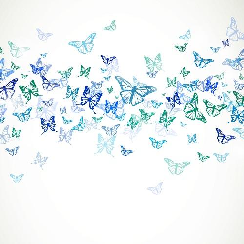 butterfly 079