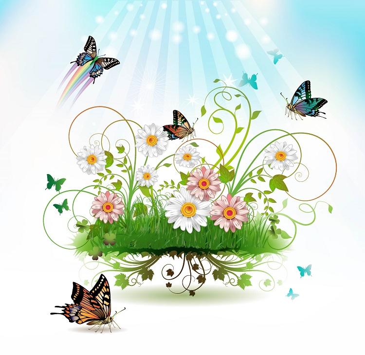 butterfly 086